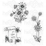 Wild Aster Scroll & Cluster Cling Stamp Set