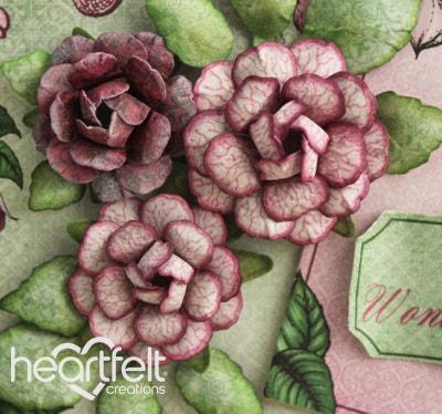 Fuchsia Wonderful Day