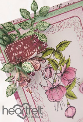Cherish Pink Fuchsias