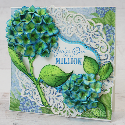 Million Dollar Hydrangea