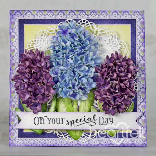 Special Hyacinths