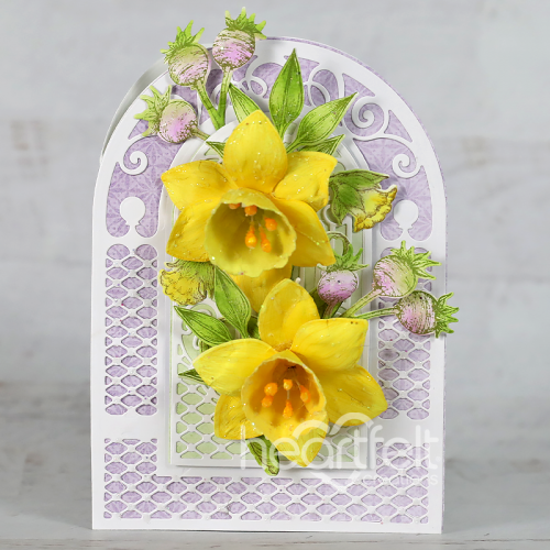 Teardrop Daffodils