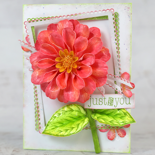 Zinnia Just for You