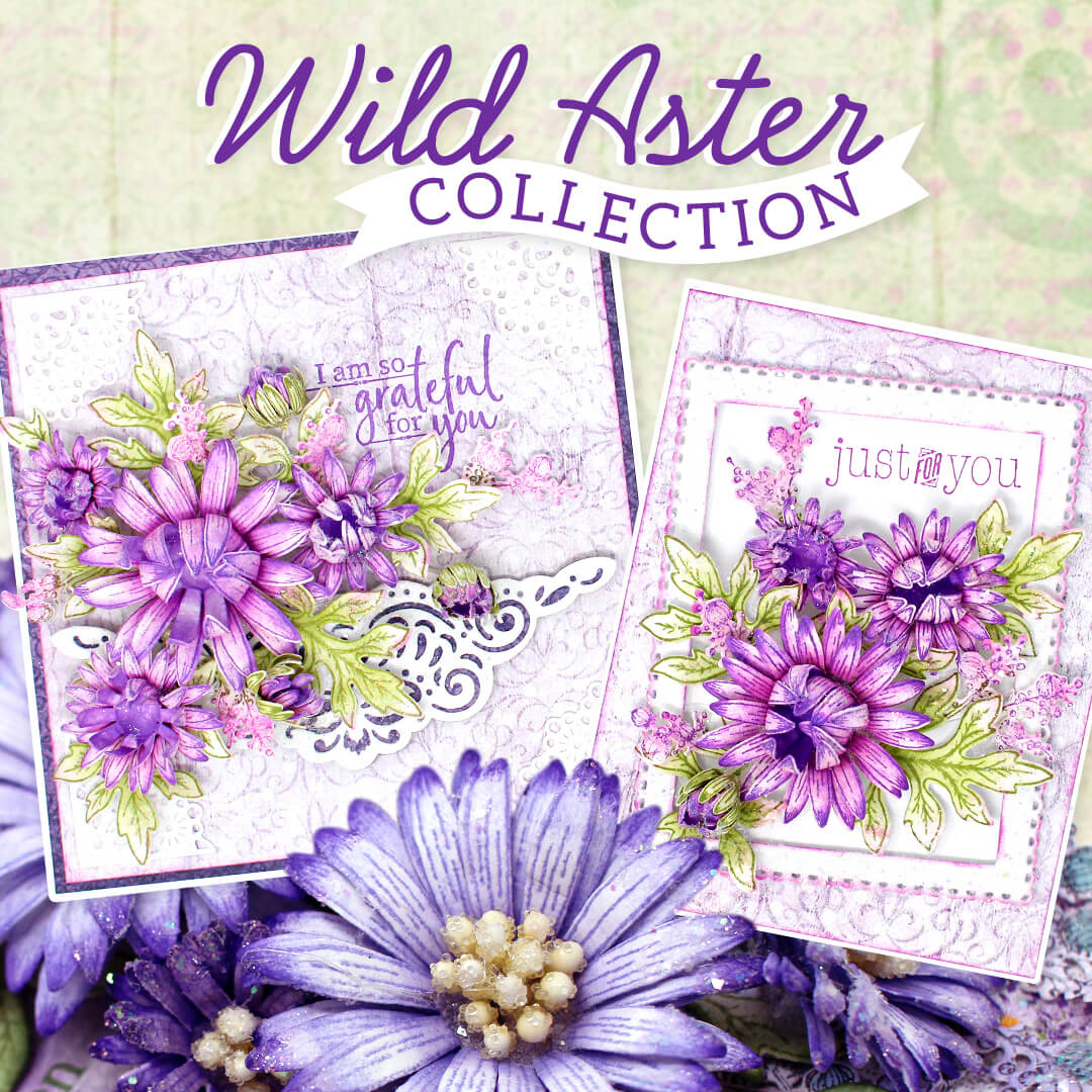 Wild Aster Collection
