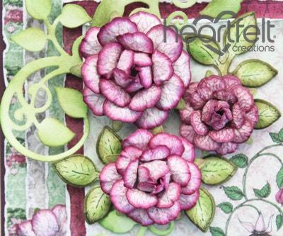 Wonderful Fuchsia Blooms